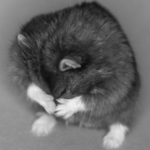 El Sr. Goxx, el cripto-hámster, es el financiero peludo que supera a los gatos gordos.