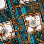 Samsung quiere copiar y pegar un cerebro humano en un SSD realmente grande