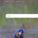 Google dice que la palabra más buscada en Bing es, espera, 'Google'